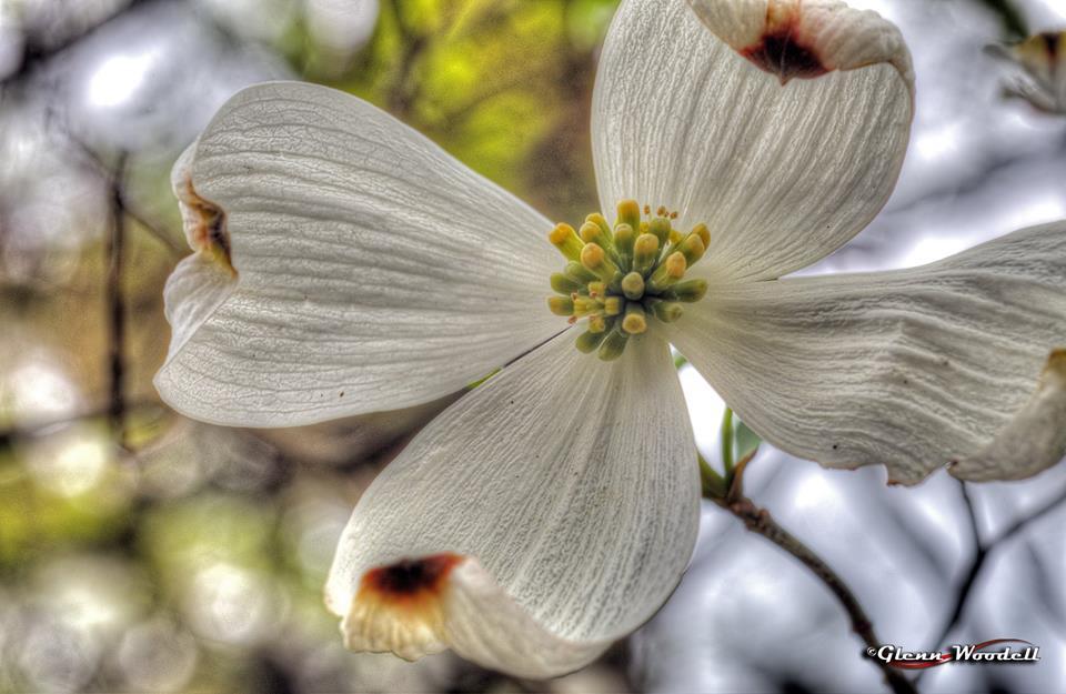 3-macro-flower