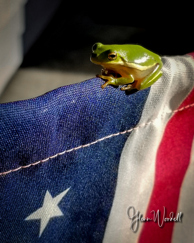 frog 11_p