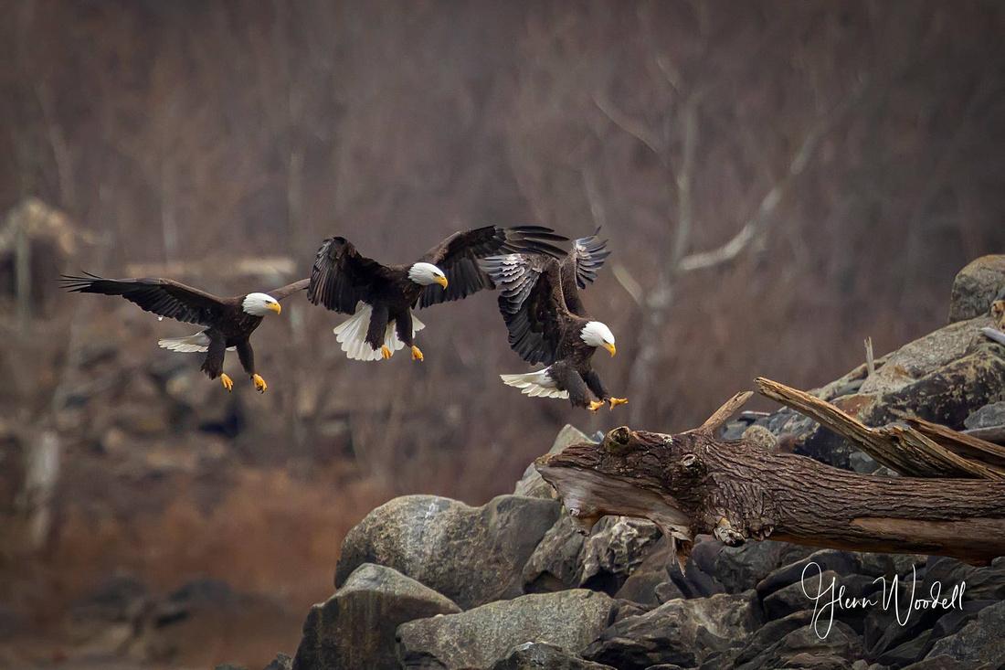 eagle landing sequence